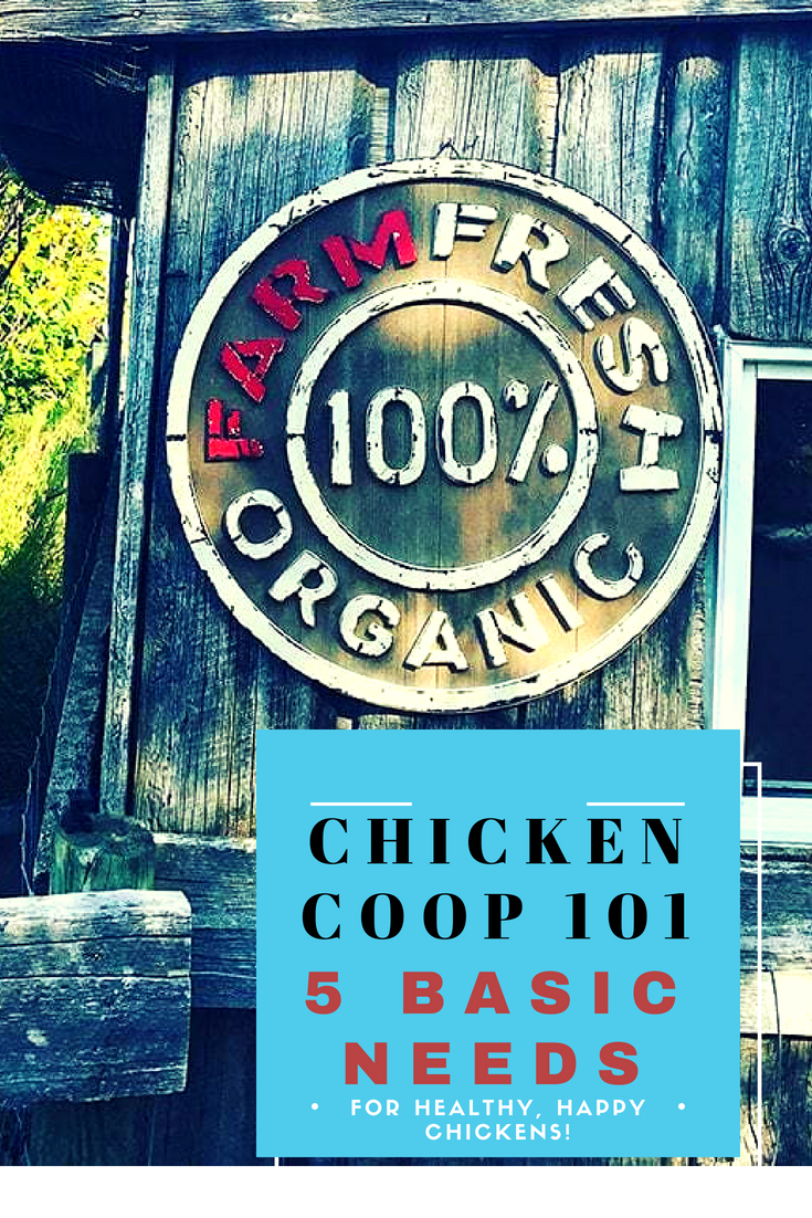 How to build a chicken coop. #backyardchickens #Chickens #Homesteading #Chickencoop #Farmlife #Farming #Homestead #DIY